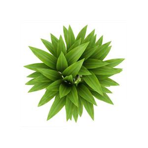 flor3